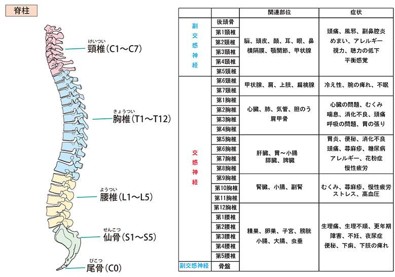 カイロプラクティック 自律神経
