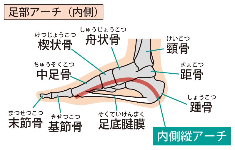 足のアーチ